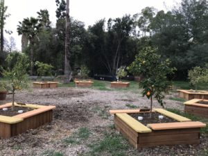 Boy Scouts and Beautification <BR>Committee Citrus Grove Project